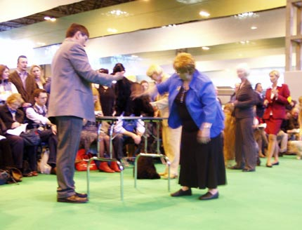 7th of March. 2008 - Bastien z Vejminku at CRUFTS 2008 in Birmingham under Mrs Sue Young (Cannyon). I would like to share with you about our great success at the biggest dog show in the World. My home bred black boy Bastien z Vejminku was shown in very hot open dog as a very young boy at his only 26 months. 20 entries was there, mostly Show Champions. We were chosen as 8 best dogs in class, later 5 dogs were awarded, so we finished as 6th - 8th in this class. I will never forget this day in my life ...
