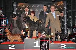 Robin Hood z Vejminku res. Junior Best In Show under Mr M. Vaclavik
