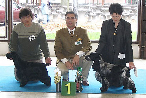 Sabina z Vejminku  - Club Winner Show Ceske Budejovice -  30.10.2004. Another great day for my small kennel !!! at the age only of 14 th months received CAJC, Club Junior Winner, B.O.B. under Mr Dr Tamas Jakkel.