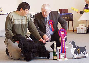 6.3.2005 SOEST SPEC. SHOW (Cocker Club Deutschland). Another great day for my small kennel. Sabina z Vejminku won CAC, BEST BITCH, BEST OF BREED, BEST IN SHOW under famous UK judge Mr Moray Armstrong (Bitcon).