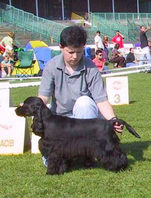 Bastien z Vejminku went Puppy dog (9-18 months) & BOB Junior - CACIB SHOW in Wroclaw 2006