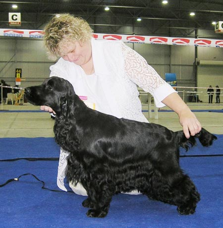 Bastien z Vejminku - CACIB Praha 2007 - Excel. I., CAC, CACIB, Qualification to the Crufts