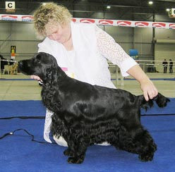 Bastien z Vejminku - Excel. I., CAC, CACIB, Qualification to the Crufts