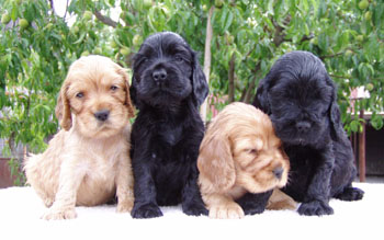 Q - litter at five weeks