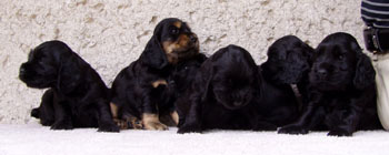 R - litter at five weeks